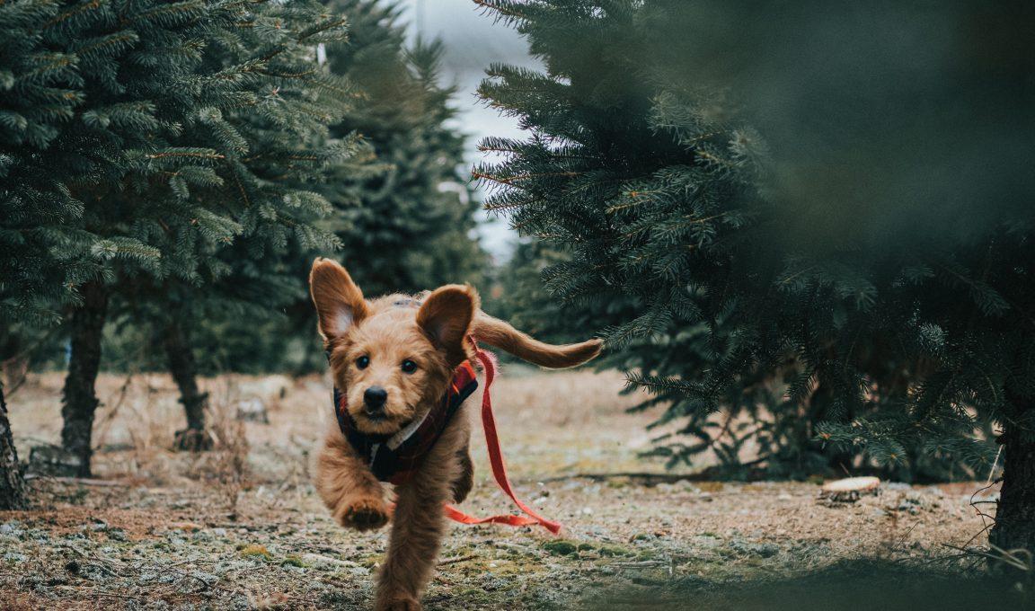 Nasportowo dla zwierzaków – charytatywny bieg zpsami